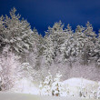 Winter wood in the night - Stock Photo