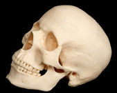 Human skull isolated on black background — Stock Photo