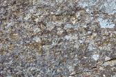 Background - gray rock with lichen — Stock Photo