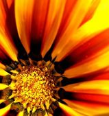 Orange/yellow flower — Stock Photo