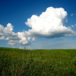 Green field and clouds — Stock Photo