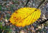 Yellow leaf — Stock Photo
