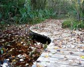 The leaves on a wood bridge — Stock Photo
