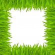 The frame of green grass — Stock Photo