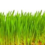 hierba verde aislada en blanco — Foto de Stock