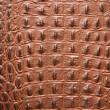 Texture leather of a crocodile — Stock Photo