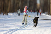 Girl on skis is going for a running dog. — Stock Photo