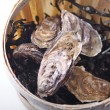 Wooden bucket with oysters and seaweed — Stock Photo