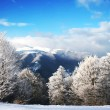 Royalty-Free Stock Photo: Winter Scenics