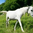 White horse — Stock Photo #1019499