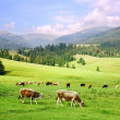 Stock Photo: Carpathian Mountains