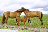 Horses family — Stock Photo