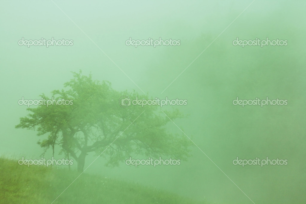 Tree in the fog in the Carpthian Mountains. cross process — Stock Photo #1019354