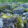 Boulders covered in moss — Stock Photo