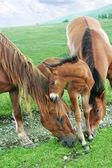 Horses family — Stock Photo