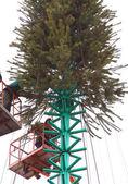 New year tree — Stock Photo