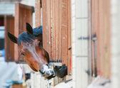 Horses behind bars — Stock Photo