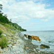 Baikal lake — Stock Photo