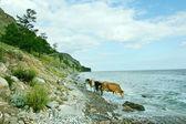Baikal lake — Stock Photo
