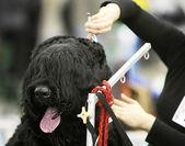 Dog at a barbershop — Stock Photo