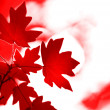Autumn leaves - Foto Stock
