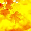 Autumn leaves — Stock Photo #1015253