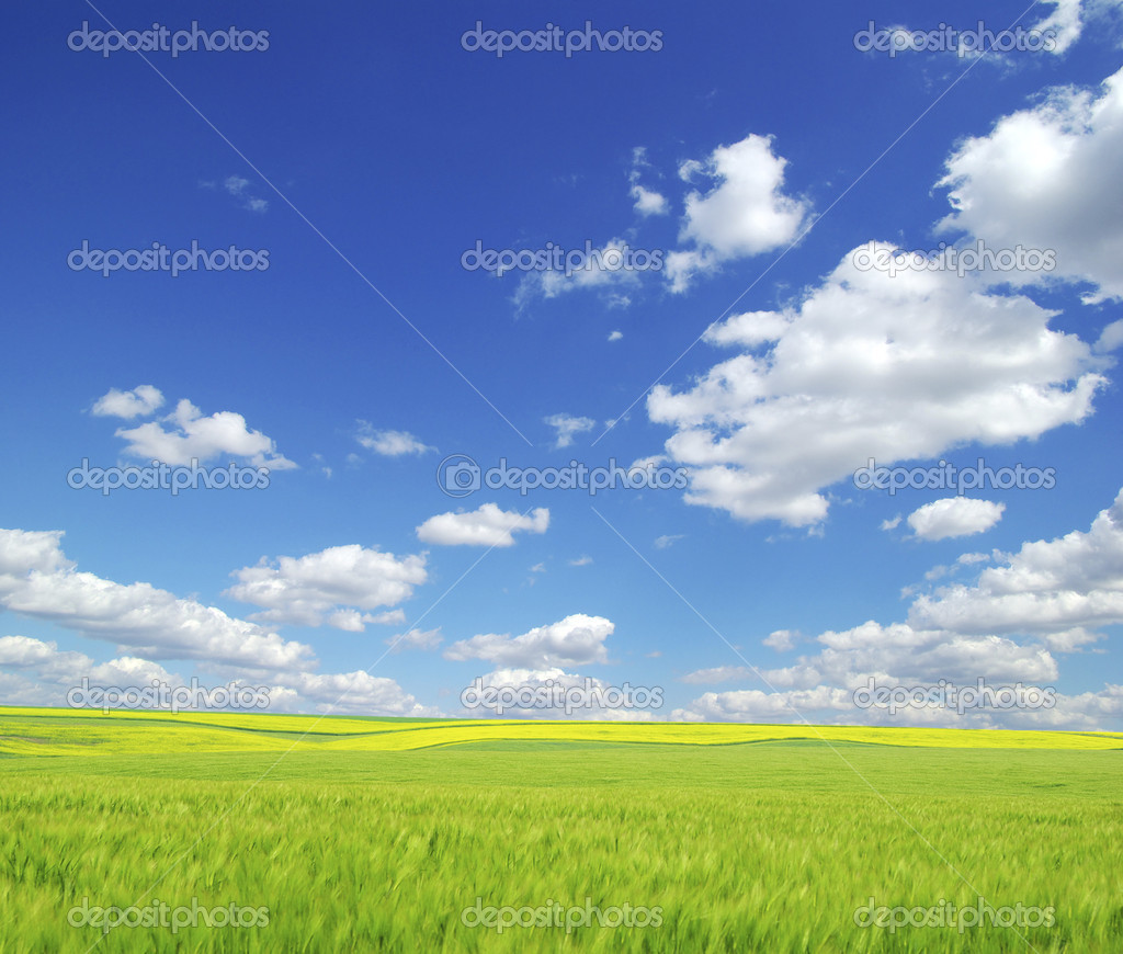 Field on a background of the blue sky — Stock Photo #1014102