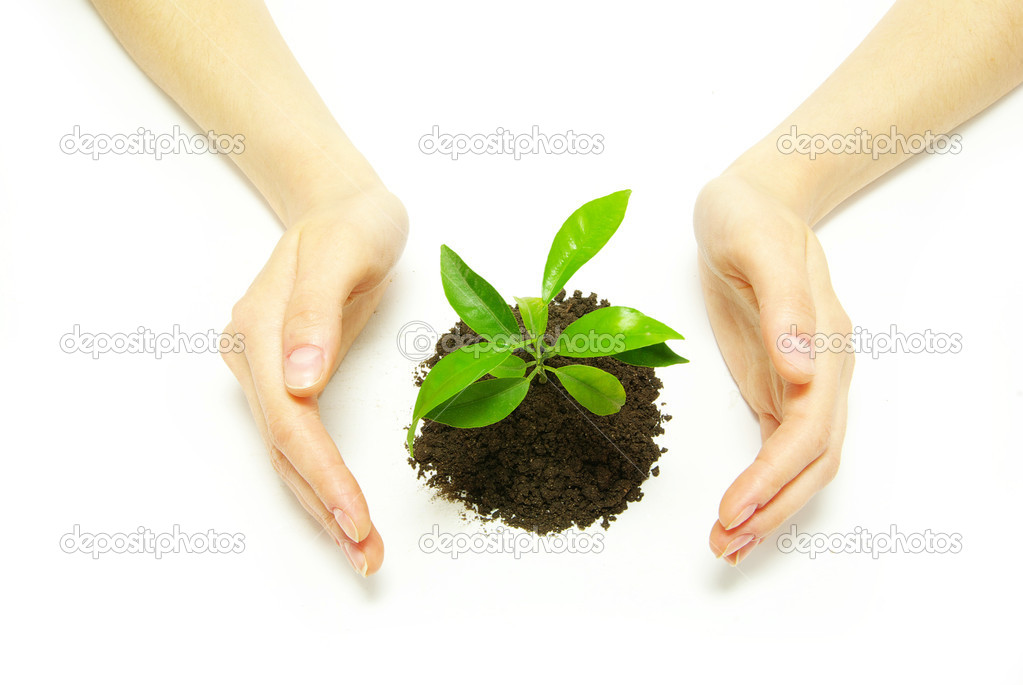 Hands holding sapling in soil  on white                    Stock Photo #1016209