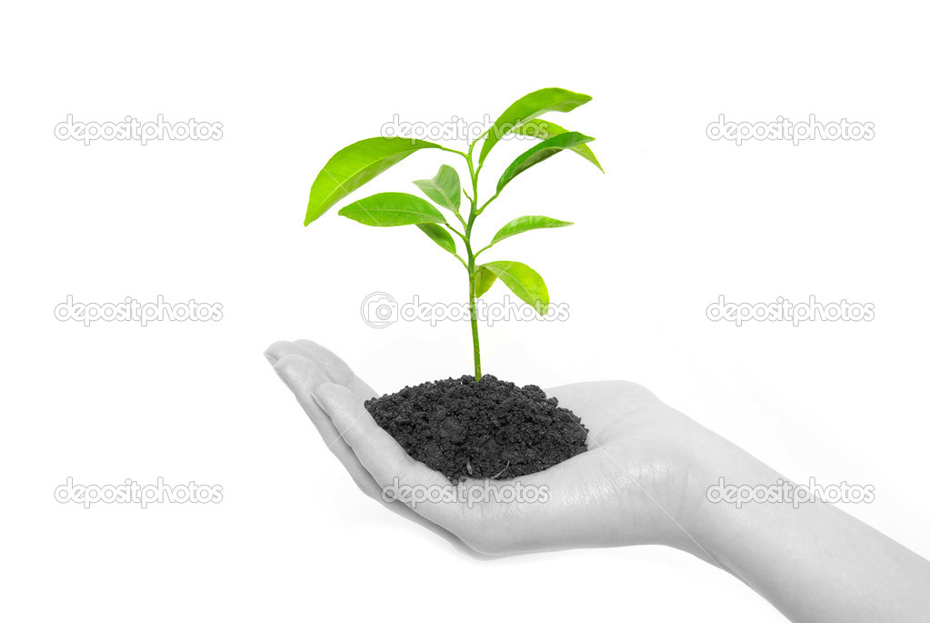 Hands holding sapling in soil  on white            — Stock Photo #1016214