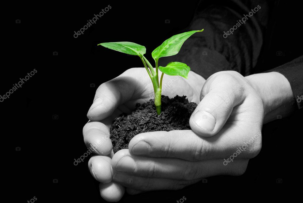 Hands holding sapling in soil — Stock Photo #1016428