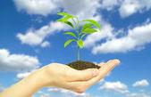 Rostlina v ruce — Stock fotografie