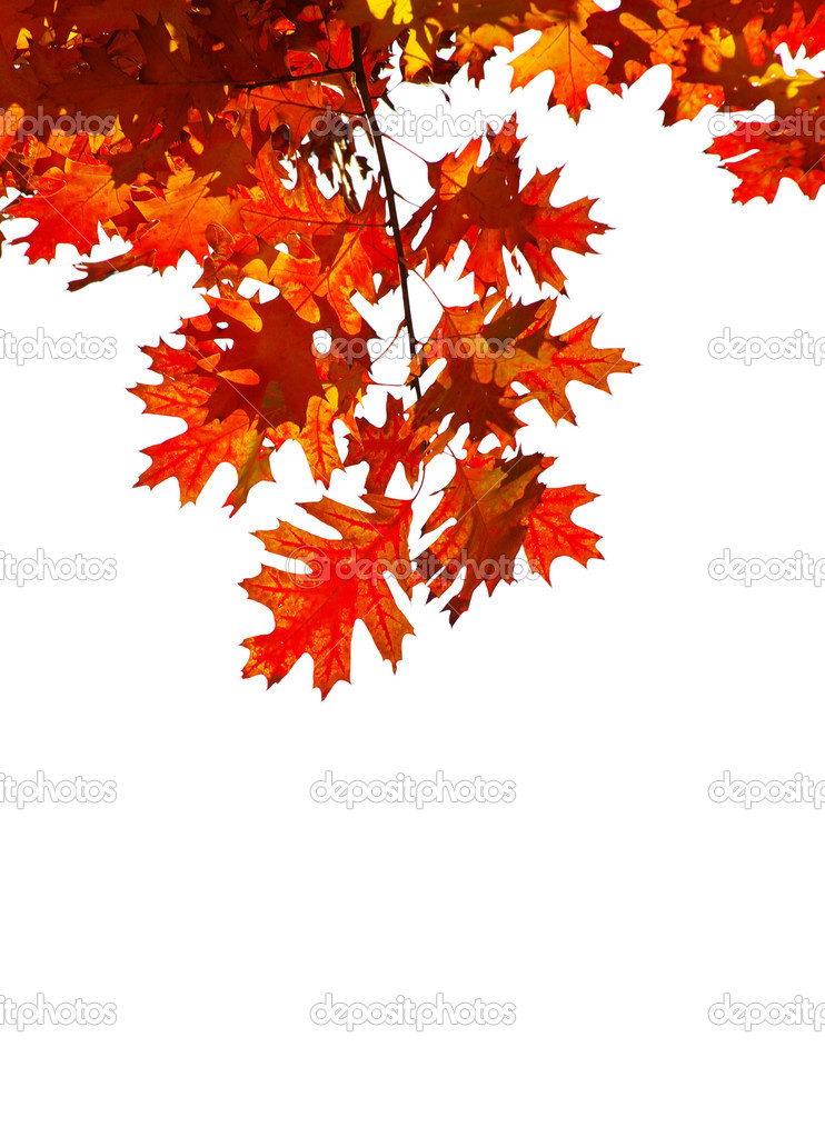 Autumn leaves isolated on white — Stock Photo #1207538