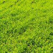Grass — Stock Photo #1626176