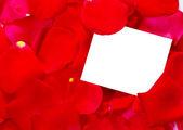 Blütenblätter rose — Stockfoto