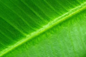 Leaf background — Stock Photo