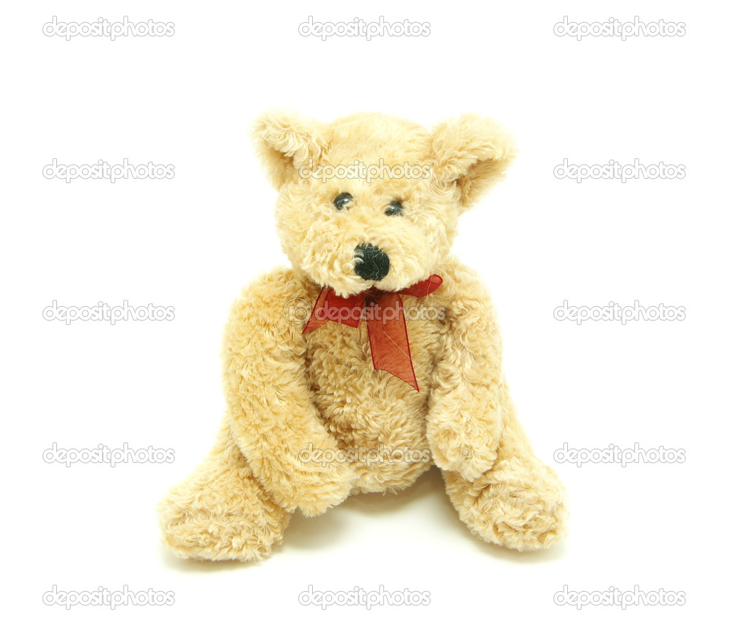 Bear isolated on white background  Stock Photo #1626249
