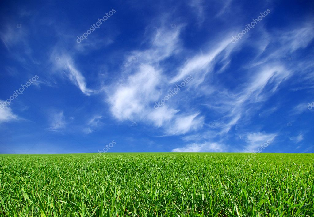 Field on a background of the blue sky  Stock Photo #1628679