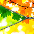 Green and autumn leaves — Stock Photo