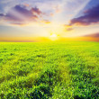 Royalty-Free Stock Photo: Green field
