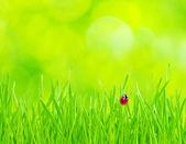 草の上のてんとう虫 — ストック写真