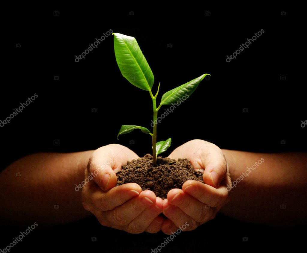 Hands holding sapling in soil on black — Stok fotoğraf #2043822