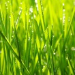 Drops on grass -  