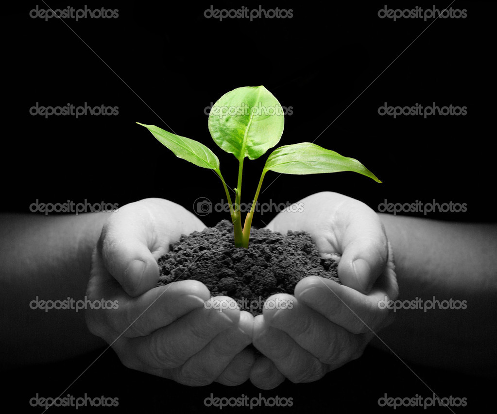 Hands holding sapling in soil on black — Stock Photo #2072848