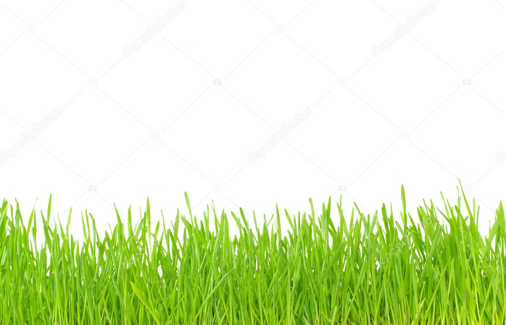 Green grass isolated on white background — Stock Photo #2072906