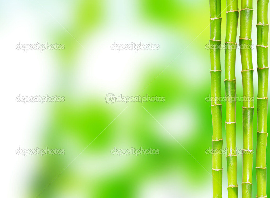 Beautiful bamboo isolated on green background — Stock Photo #2072961