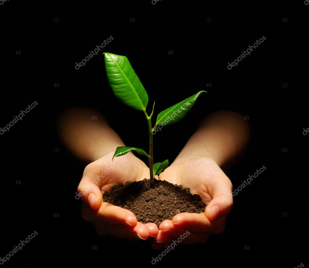 Hands holding sapling in soil on black — Stock Photo #2073122