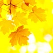 Autumn leaves — Stock Photo #2120502