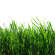 Green lawn — Stock Photo #2120702