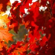 Autumn leaves — Stock Photo #2174850