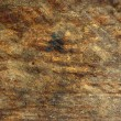 Wood texture — Stock Photo #2183363
